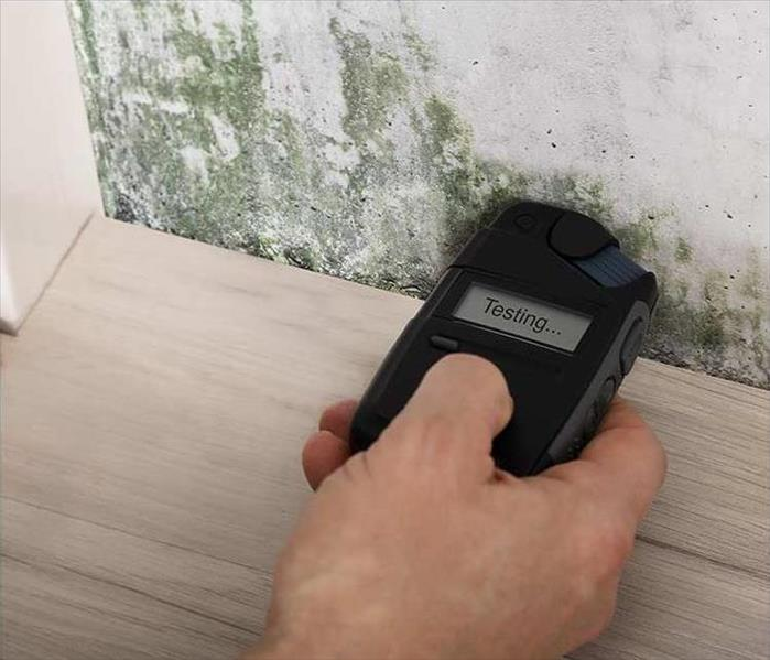 Mold Remediation What Causes Mold Damage in Westwood Village Homes?