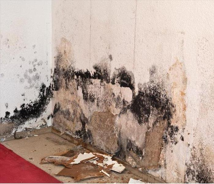 Mold Remediation Our Mold Damage Team Can Restore Your Century City Home