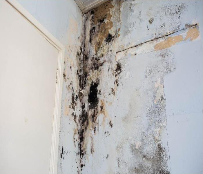 Mold Remediation You Can Trust Our Team When Your Beverly Hills Home Experiences A Mold Damage Disaster