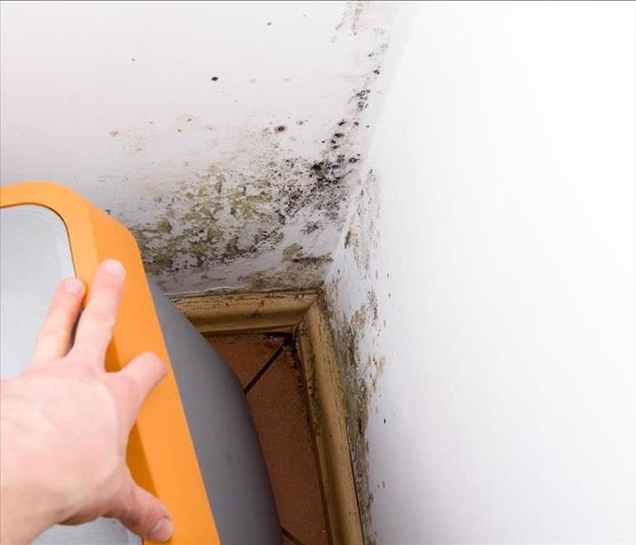 Mold Remediation Does Mold Damage in Century City Homes Need to Be Fully or Partially Contained?